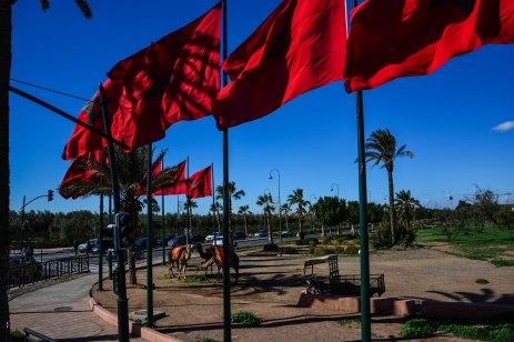 Plenty of flags, plenty of camels